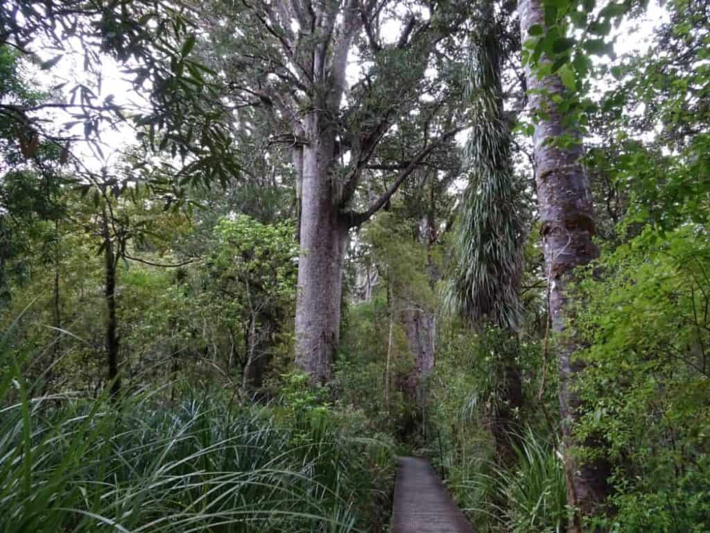 waipoua-forest-new-zealand-trail