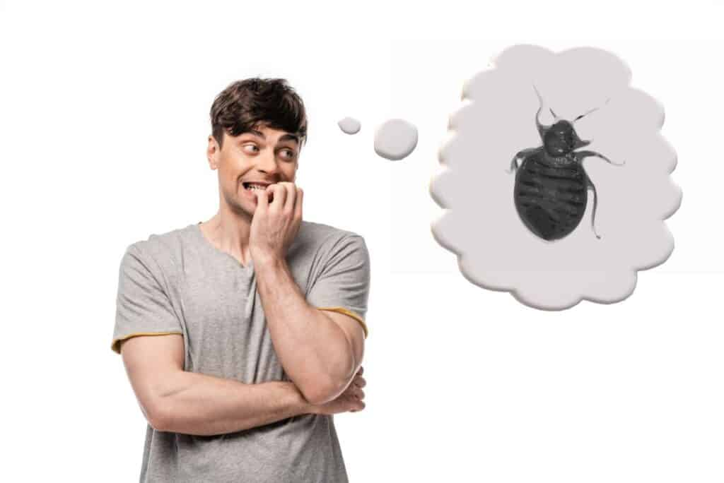Can You Get Bed Bugs Lice And Other Pests While Camping