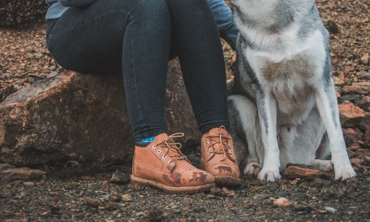 Dogs Need Hiking Boots
