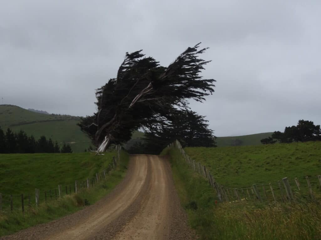 windswept-tree-catlins-new-zealand